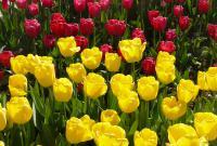 Анапа-город цветов